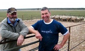Budgie Schiller & Mark Steinborner check sheep ready for 'Shear Wishes'