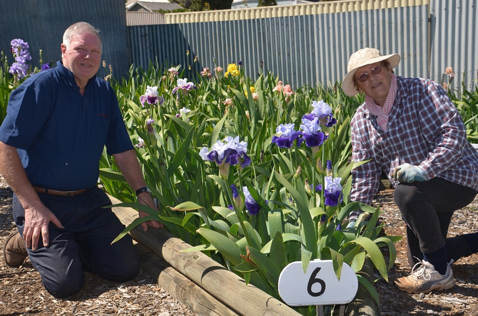 Ron & Betty Gray prepare one of the many Tall Bearded Iris beds ready for visitors.