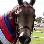 Eudunda Show Horses In Action - A Winner