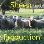 Sheep production … from the beginning