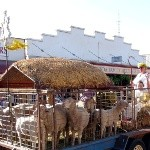 Live Nativity Scene In the Eudunda Christmas Street Parade