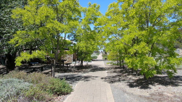 Eudunda Gardens - Beautiful colours for tree lined walk